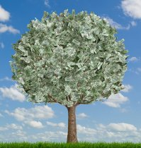 1323602387_money_tree_full_sky-716987