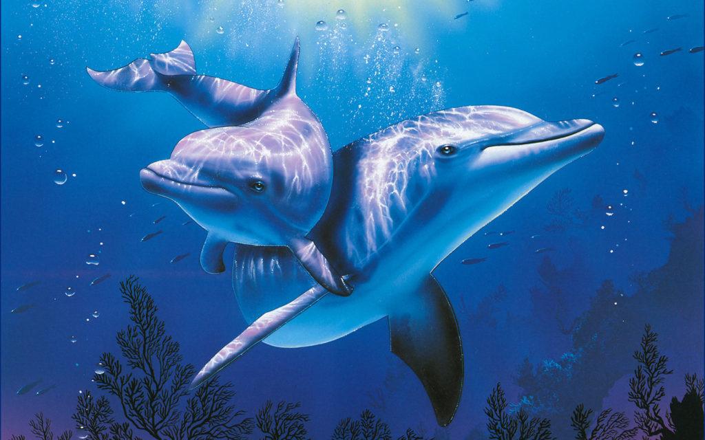 Дельфины — помощники, которые всегда рядом